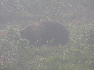 its_a_bear
