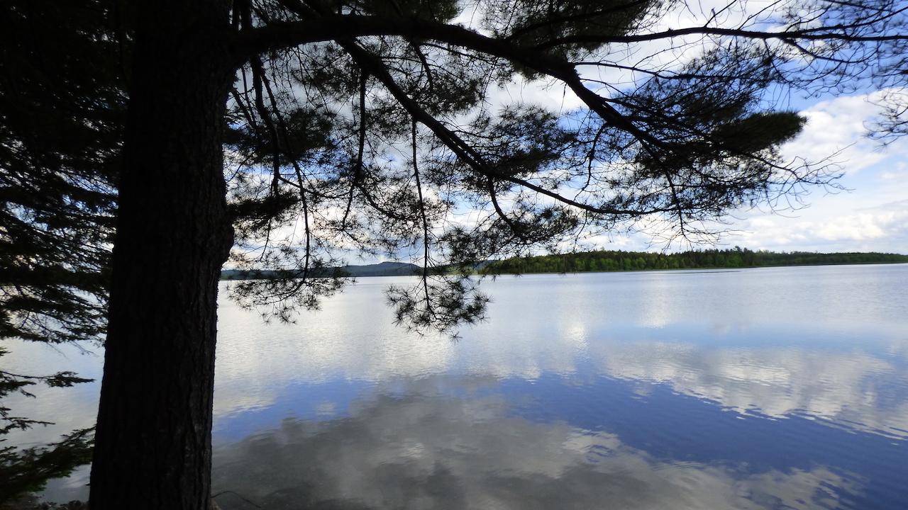 allagash_tree_water