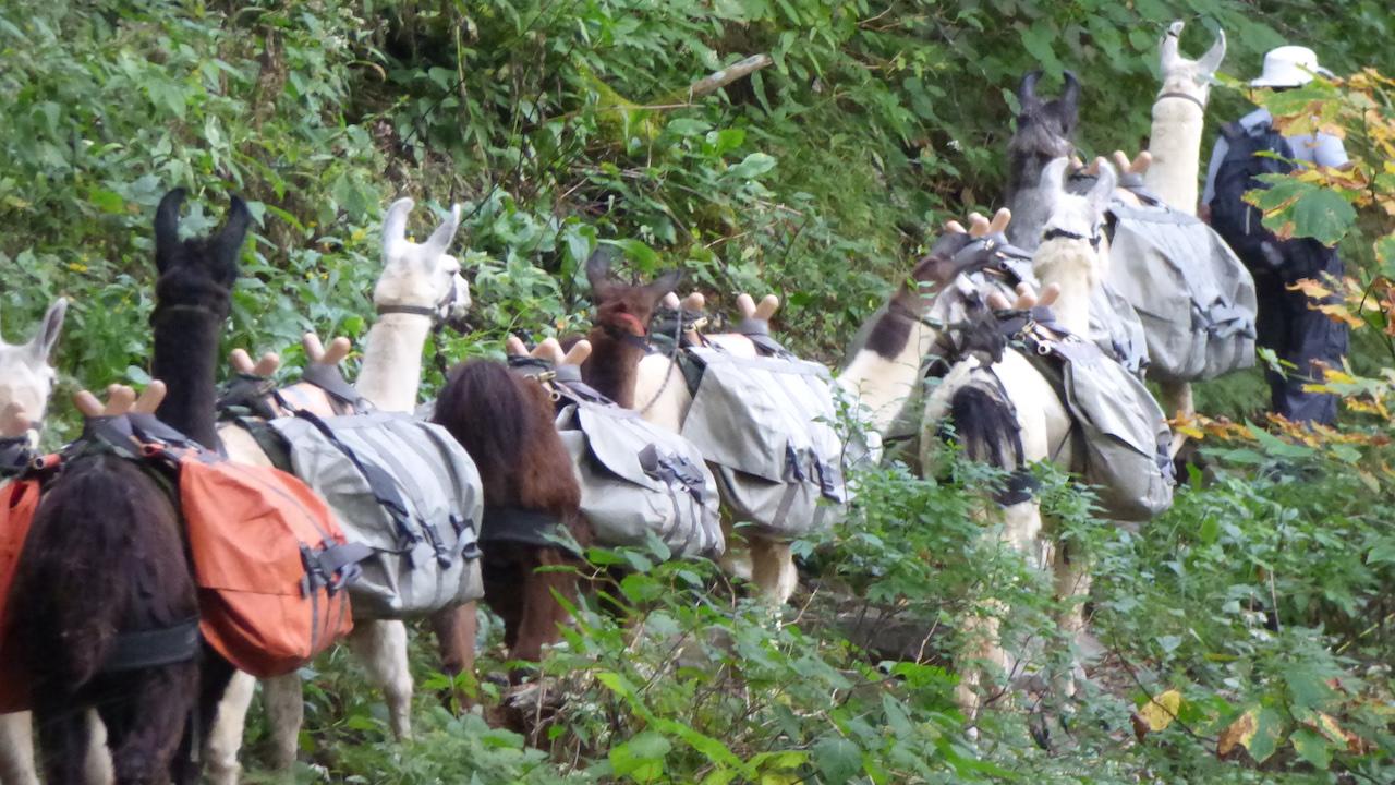 pack_llamas
